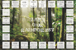 PLAY box July Save our Rainforest Board Game